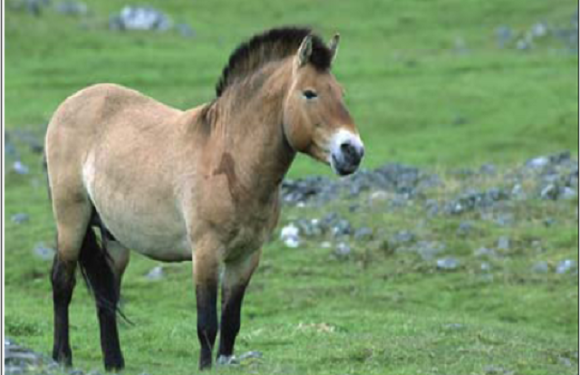 Horses as Sources of Proprietary Information: Commercialization, Conservation, and Compensation Pursuant to the Convention on Biological Diversity